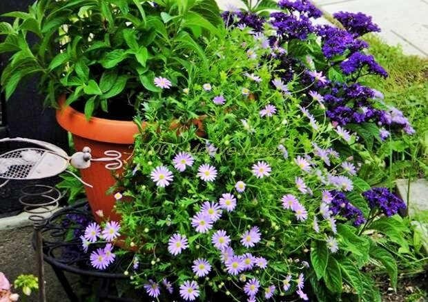 DIY-Planter-Ideas (9)