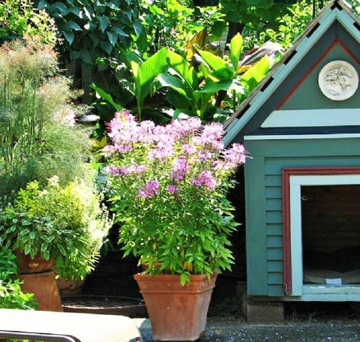 Small-Backyard-Landscaping-Ideas-1 (4)