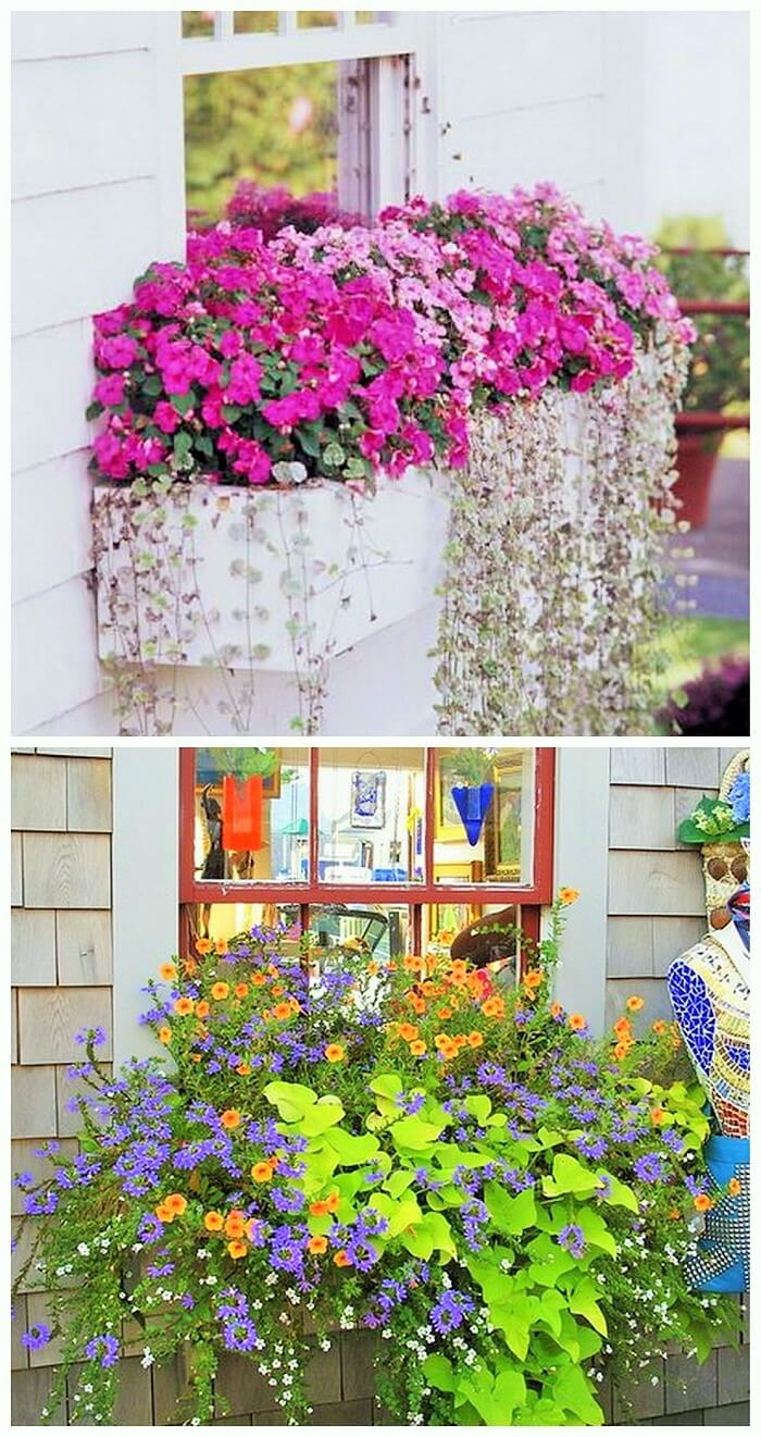 Window Decoration Ideas (6)