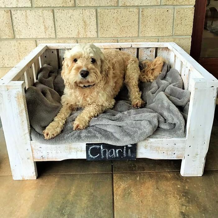 Wooden Pallets Dog Sofa Ideas (2)