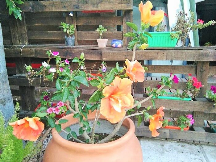 Wooden Pallets garden Ideas (2)