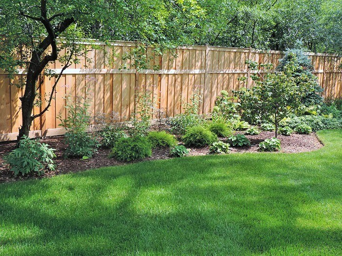 Diy-Solar-Shade-Tolerant-Shrubs