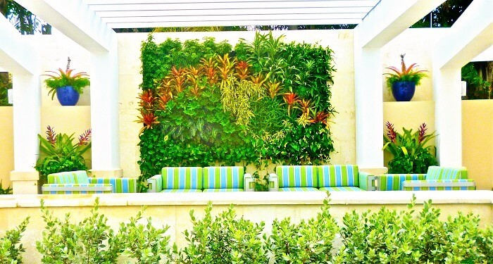 The Decor home-with -samal shade plants. (15)