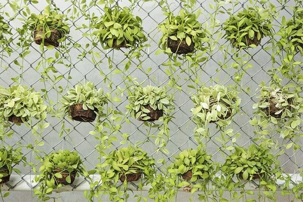 vertical-Garden-beauty-shot-Ideas