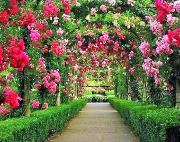 beautifull colorful garden