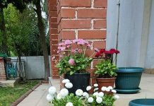 Home-Decor-Small-Garden-ideas-01