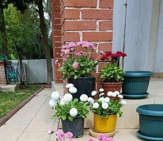Home-Decor-Small-Garden-ideas-01